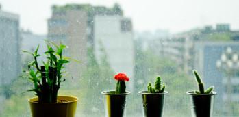 pequenos-cactus-verdes-se-encuentran-en-la-ventana-en-el-momento-de-la-lluvia_43938-19